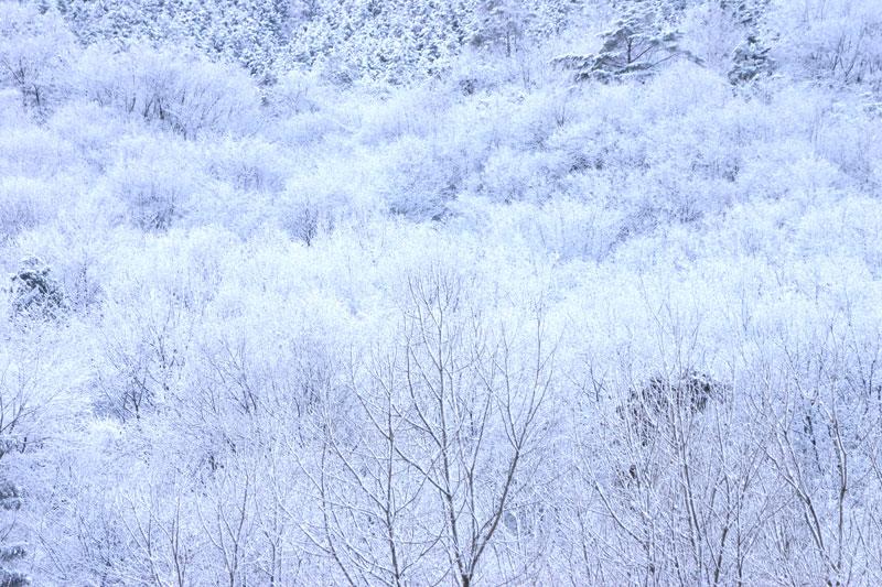 霧氷 (徳島県 美馬市 脇町)