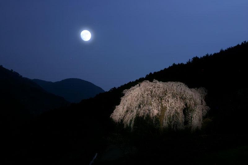 春宵1 (香川県 仲多度郡 まんのう町)