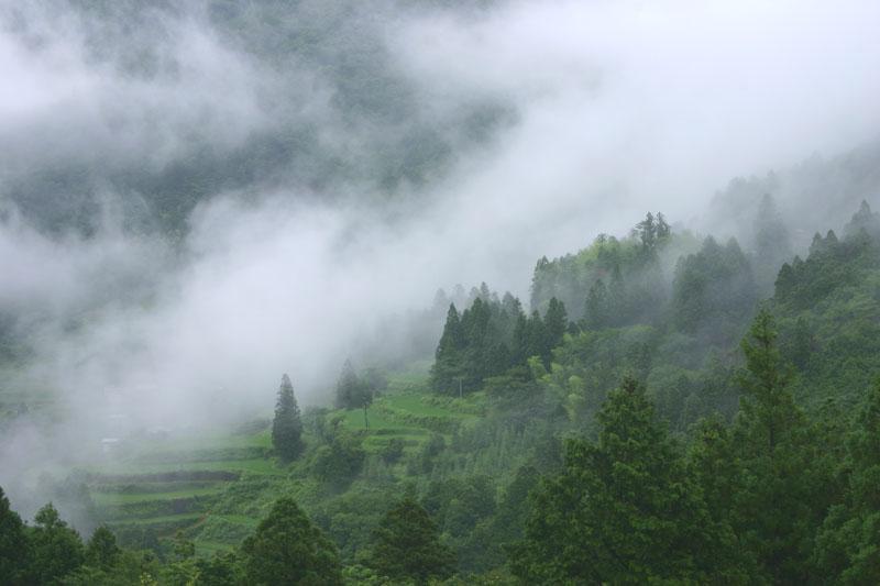 霧流れる棚田 (高知県 土佐郡 土佐町 伊勢川)
