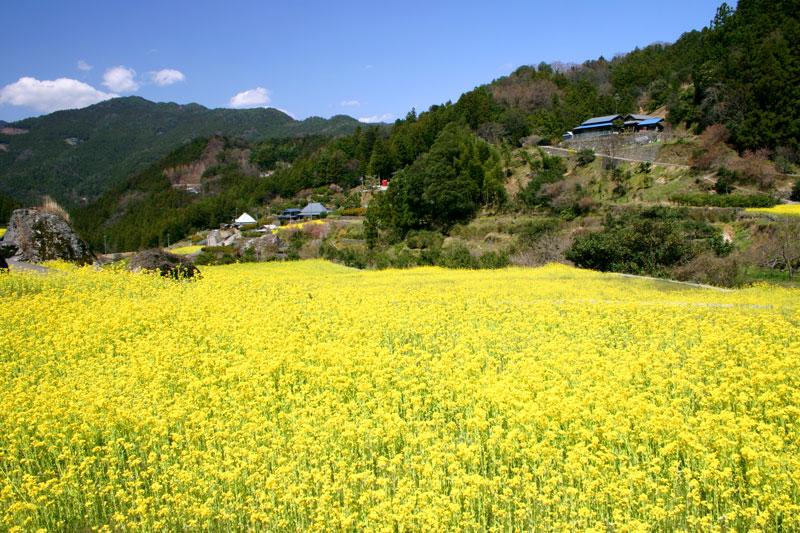 菜ノ花の里2 (徳島県 名西郡 神山町)