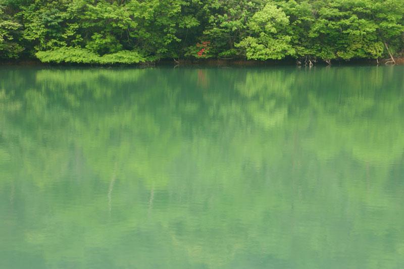 湖畔に咲く (香川県 綾歌郡 綾川町)