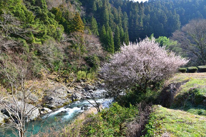里山風景 (徳島県 名西郡 神山町)