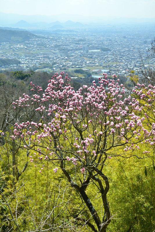 八栗山上 (香川県 高松市 牟礼町 八栗山)