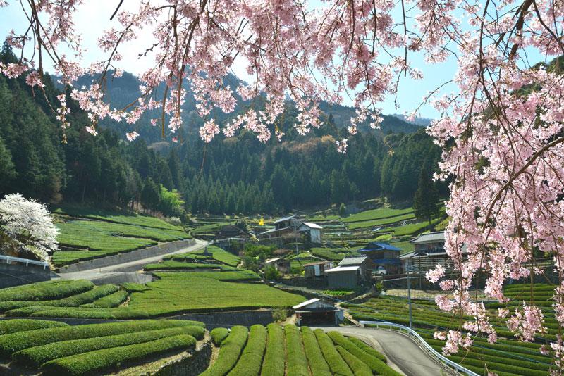 里山の春2 (徳島県 美馬市 穴吹)