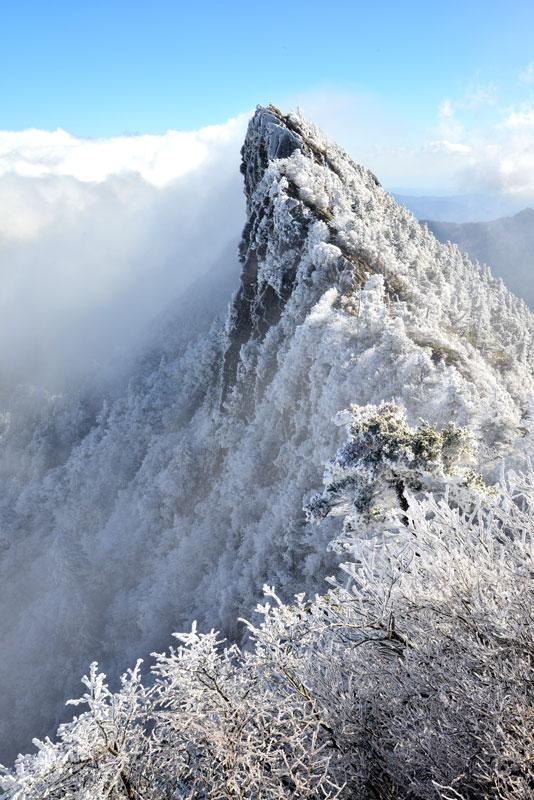 霊峰霧氷 (愛媛県 西条市 石鎚山)