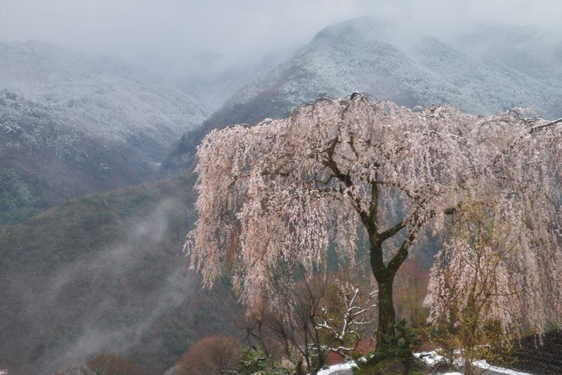 寒き春 (香川県 仲多度郡 まんのう町)