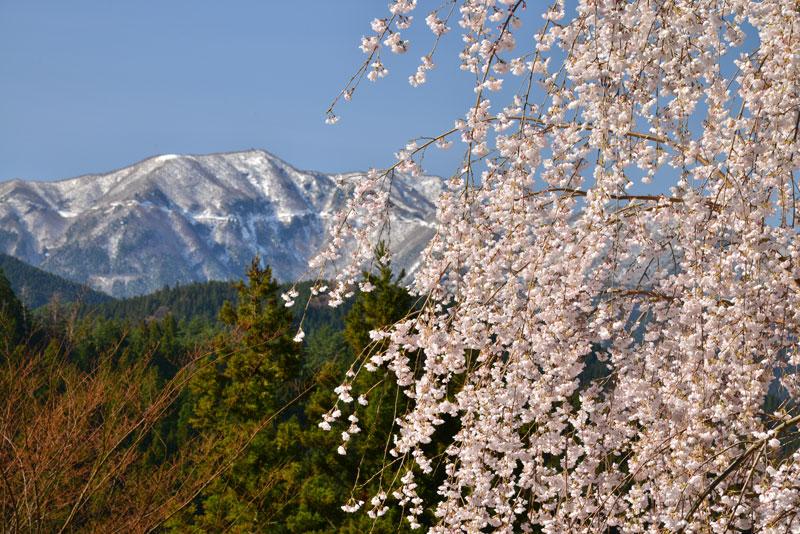 冠雪の春 (徳島県 美馬市 木屋平)