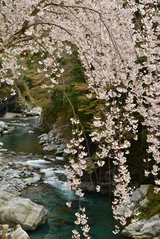 渓谷の花びら2 (徳島県 美馬市 木屋平)
