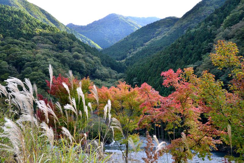 秋の訪れ (徳島県 三好市 西祖谷山)