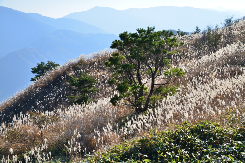 「落合峠の印象2」 (徳島県三好市東祖谷山落合峠)