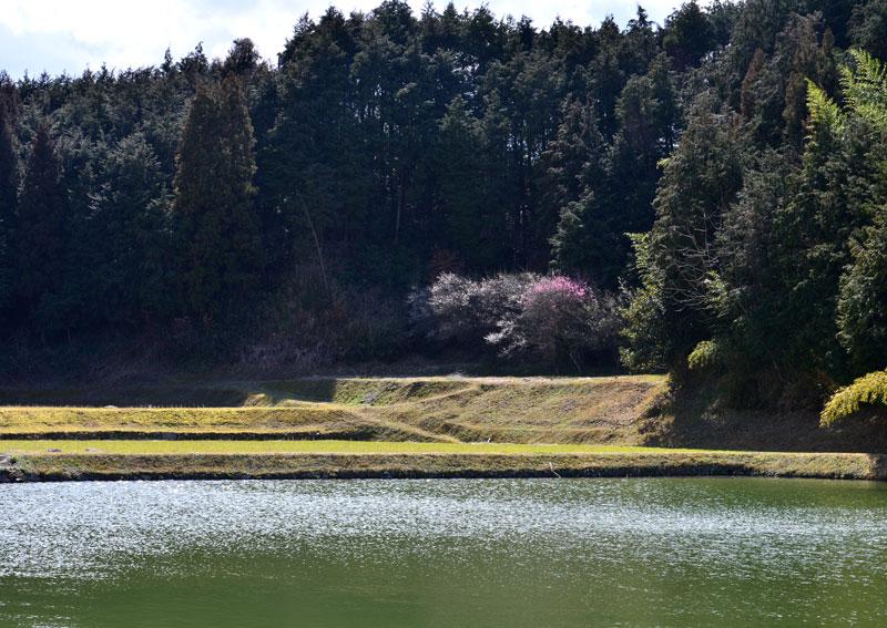 暖春 (香川県 綾歌郡 綾川町)