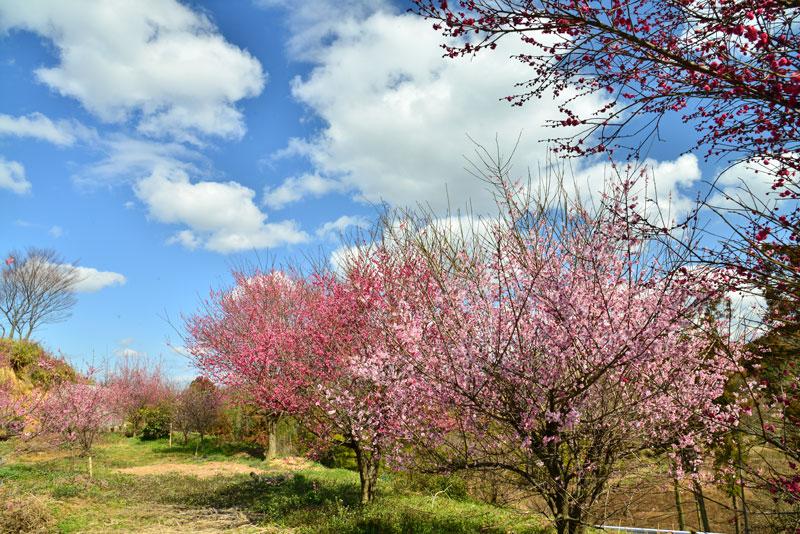 暖かな日 (香川県 綾歌郡 綾川町)