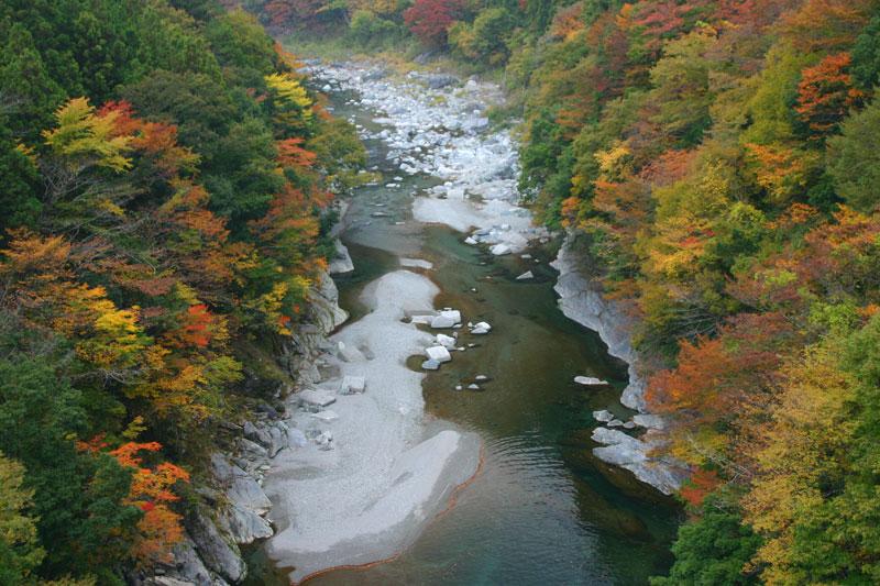 色づく祖谷渓 (徳島県 三好市 西祖谷山 )