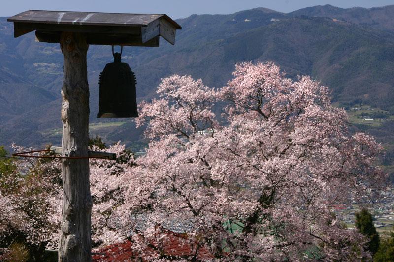 桜堂 ひょうたん桜 (徳島県 美馬郡 つるぎ町)