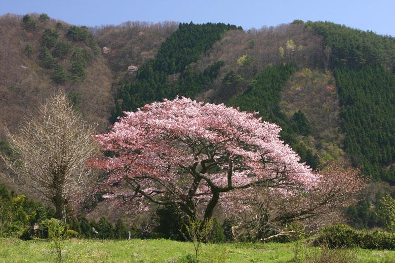 葛籠野風景 (香川県 仲多度郡 まんのう町)