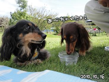 wans_20101017-02.jpg