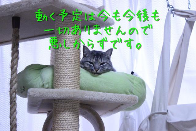 kako-jYAsXt8L9k4NwMLg.jpg