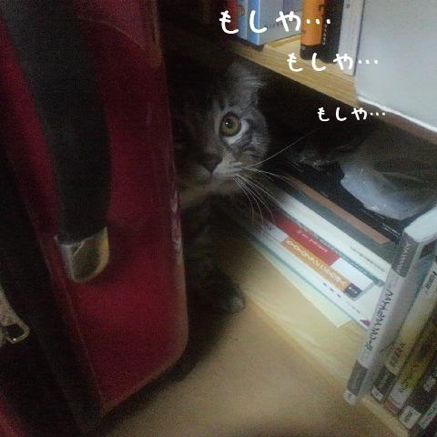 9pCJR.jpg