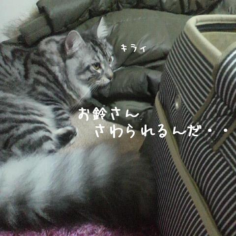 BnKij_20101214220436.jpg