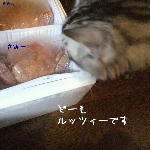 FRwcF.jpg