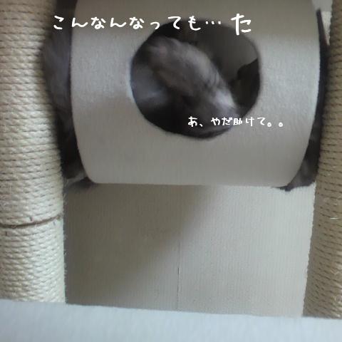 JOEI_.jpg