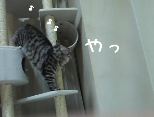 MuYV2.jpg