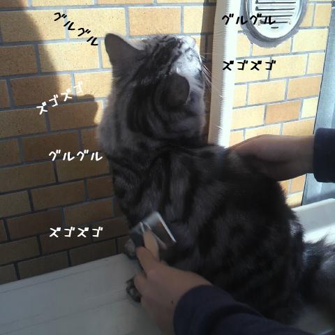 YWeQN4.jpg