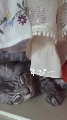 わんだふるにゃんのブログ-寝る