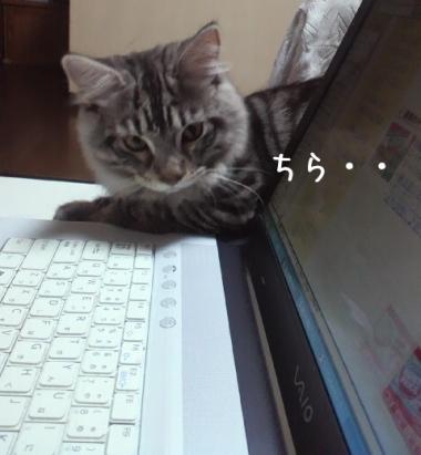 ・:*:;Wonderfulダニャン;:*:・