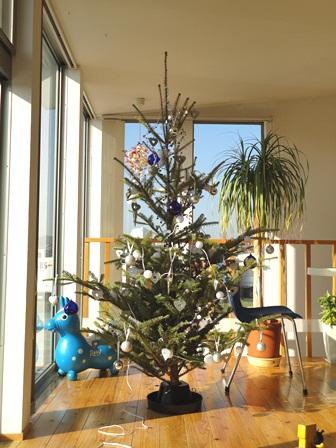 もみの木のクリスマスツリー20105