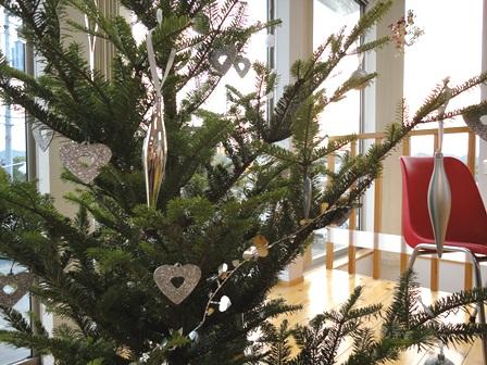 もみの木のクリスマスツリー20102