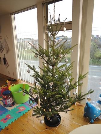 もみの木のクリスマスツリー20101