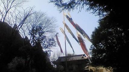 这是日本的鲤鱼帜