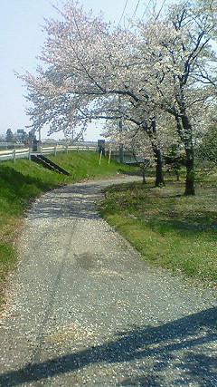 河っぺりの公園
