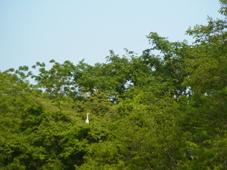RIMG5248.jpg