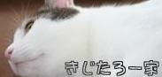 IMG_9263きじバナー