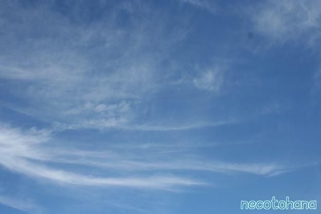 IMG_9604夏雲