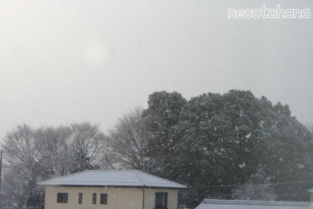 IMG_2986雪