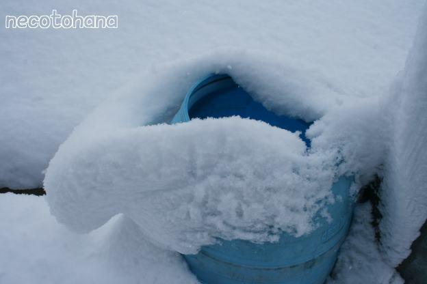 IMG_3217雪
