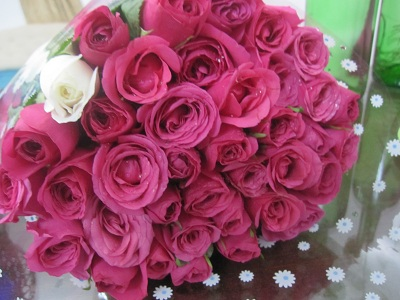 rose3103a.jpg