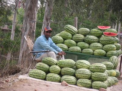watermelon_20110421163022.jpg