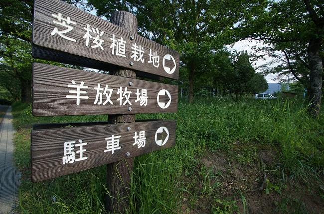 12_20120518200328.jpg
