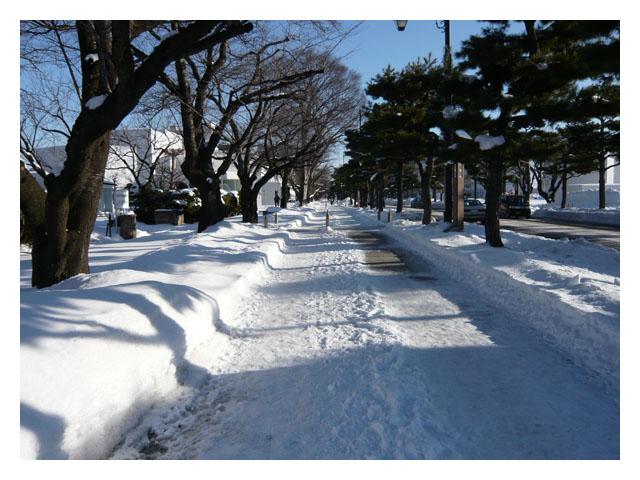 雪の官庁街通り