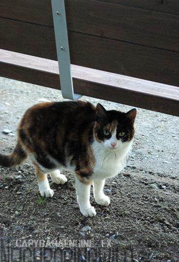 kouencats12.jpg