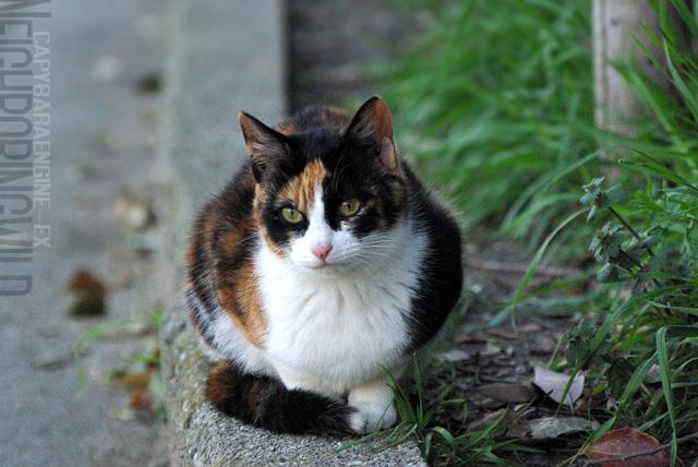 kouencats13.jpg