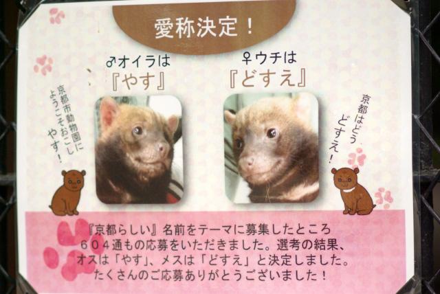 kyoyabi2.jpg
