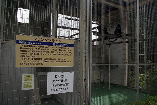 nishiyamalesser-32.jpg