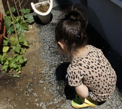 どんべ 庭いじり中