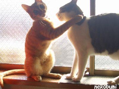 抱きついてるみたい