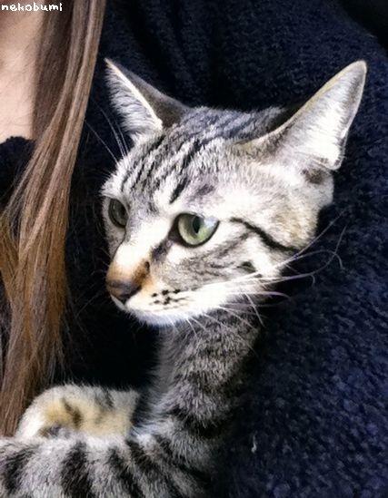 美猫だ~!
